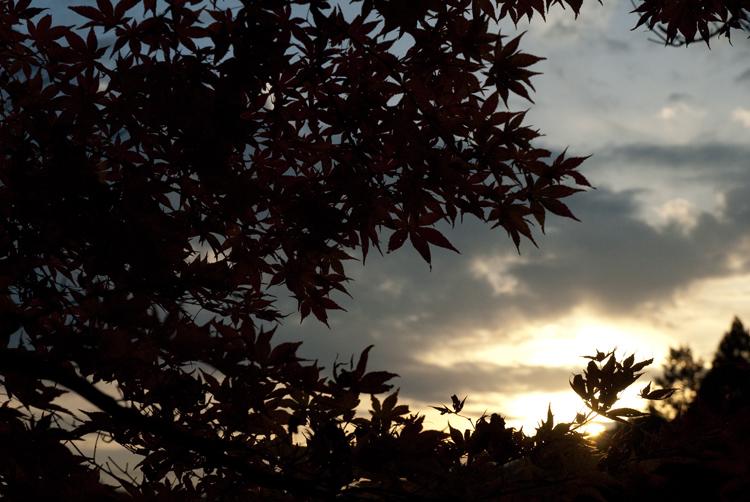 庭の紅葉_d0231263_22585517.jpg