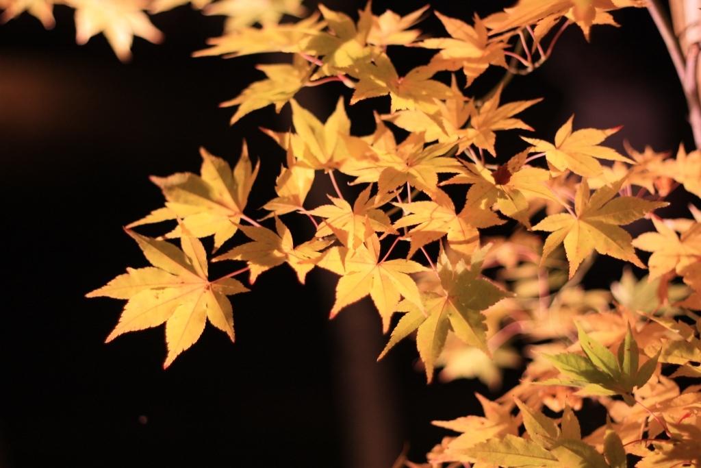 11月16日 京都の秋_a0023466_22140505.jpg