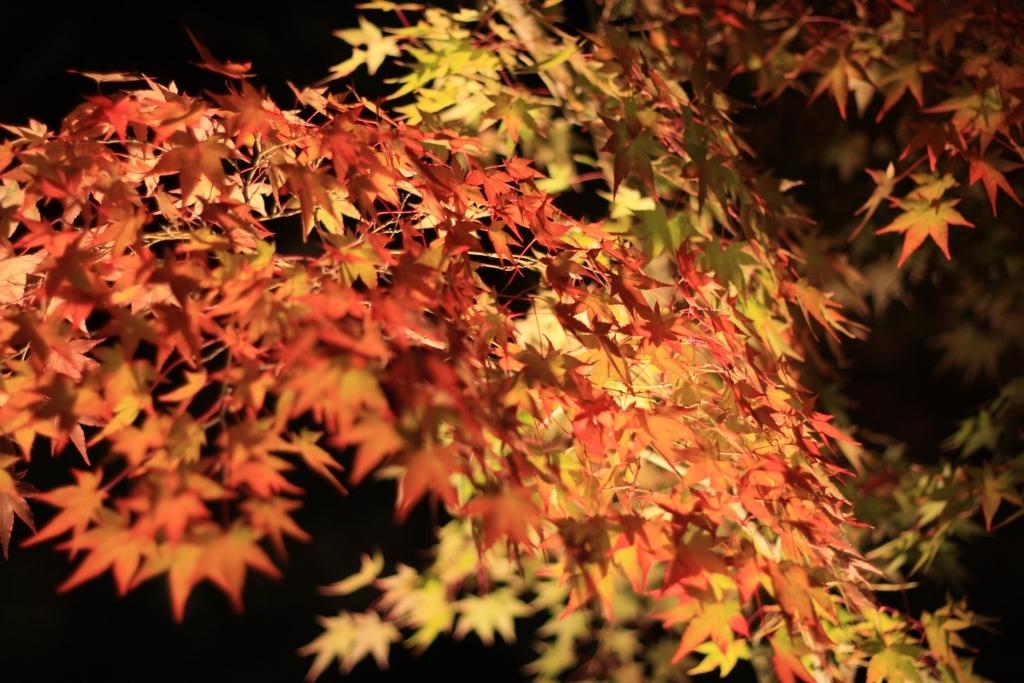11月16日 京都の秋_a0023466_22150769.jpg