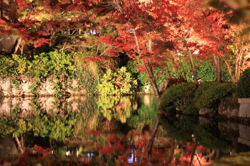 11月16日 京都の秋_a0023466_22154540.jpg