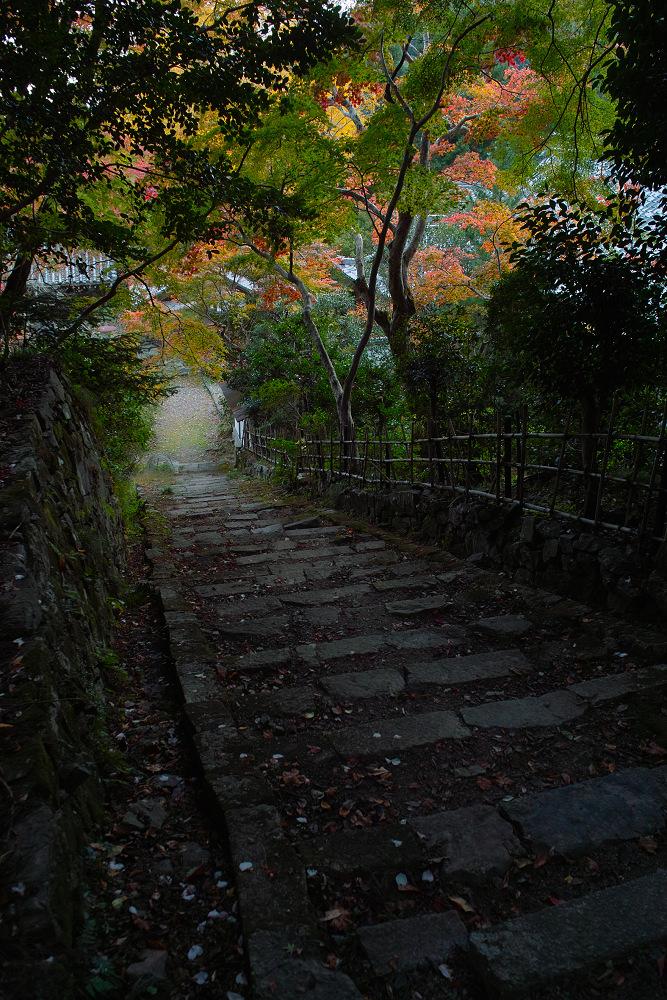 紅葉 2014  <金蔵寺>                    _f0021869_23404947.jpg