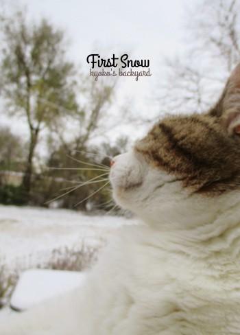 初雪をみた猫の反応_b0253205_03000317.jpg