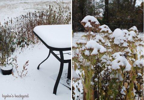 初雪をみた猫の反応_b0253205_03003040.jpg