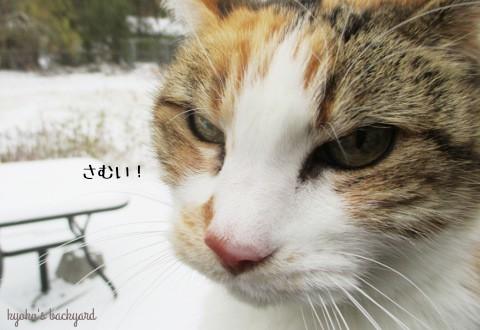 初雪をみた猫の反応_b0253205_03005983.jpg