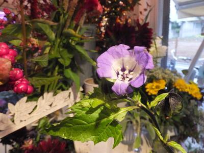 オークリーフ花の教室(田中さんの作品)_f0049672_17321265.jpg