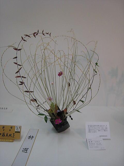 七夕花展2_b0189573_231985.jpg