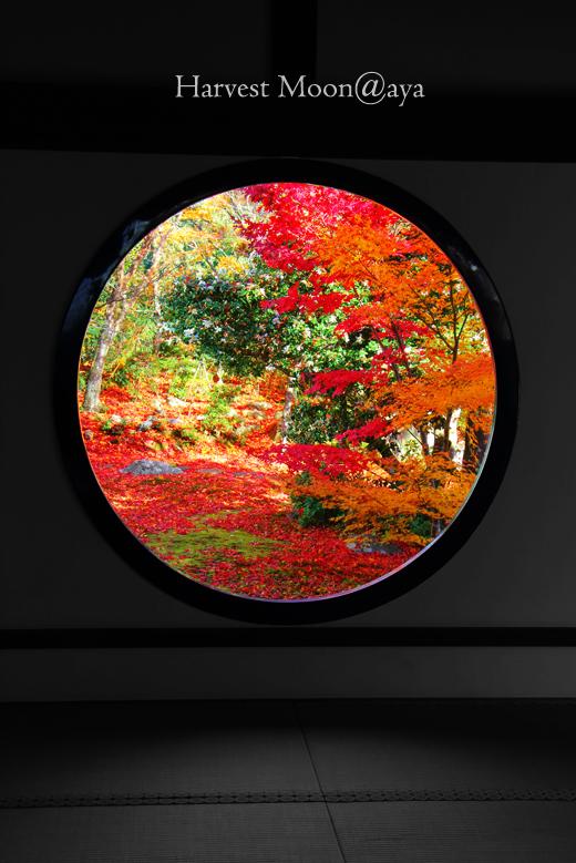 The Round Frame_b0208495_21263235.jpg