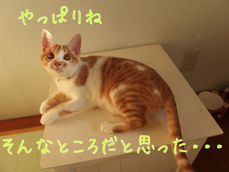 a0177105_15441031.jpg