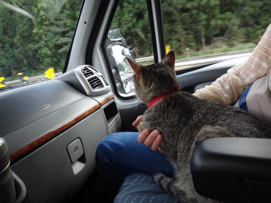不思議な猫の物語(旅ー琵琶湖と日本海へ)_f0064906_16322756.jpg