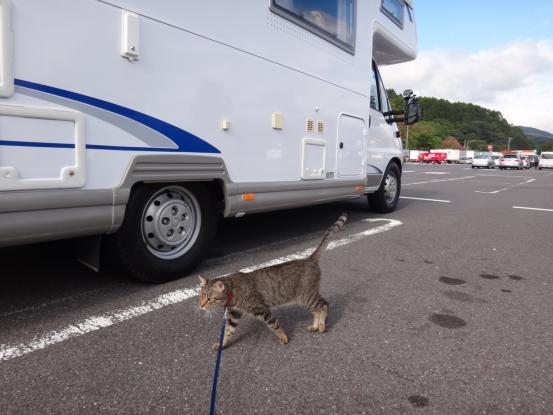 不思議な猫の物語(旅ー琵琶湖と日本海へ)_f0064906_1633025.jpg