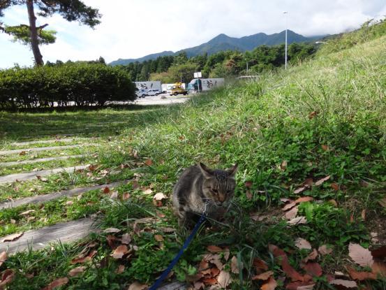 不思議な猫の物語(旅ー琵琶湖と日本海へ)_f0064906_16335925.jpg