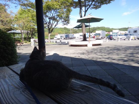 不思議な猫の物語(旅ー琵琶湖と日本海へ)_f0064906_16352573.jpg