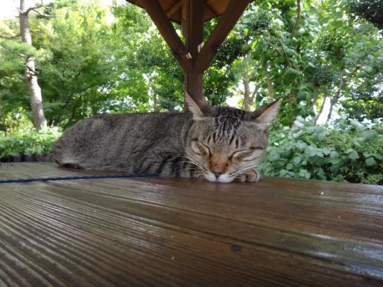 不思議な猫の物語(旅ー琵琶湖と日本海へ)_f0064906_16354979.jpg