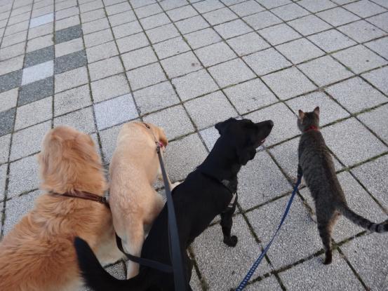 不思議な猫の物語(旅ー琵琶湖と日本海へ)_f0064906_1636274.jpg