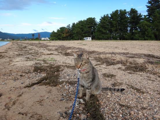 不思議な猫の物語(旅ー琵琶湖と日本海へ)_f0064906_16373419.jpg