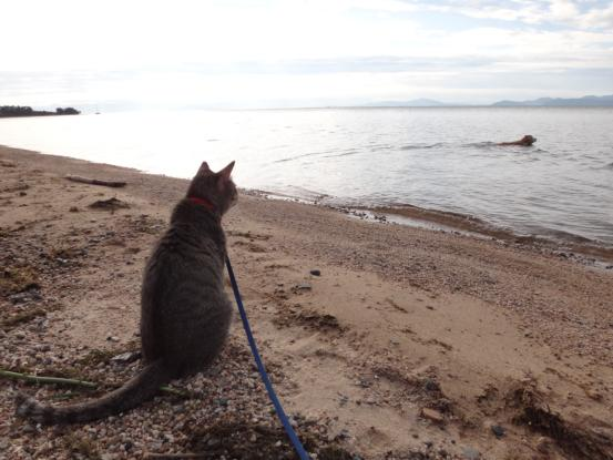 不思議な猫の物語(旅ー琵琶湖と日本海へ)_f0064906_1639083.jpg