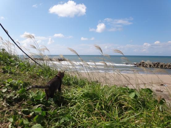 不思議な猫の物語(旅ー琵琶湖と日本海へ)_f0064906_164027100.jpg