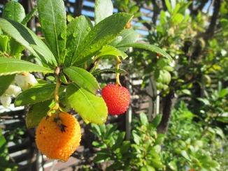 実りの秋、緑の楽園から!_d0091909_11403754.jpg