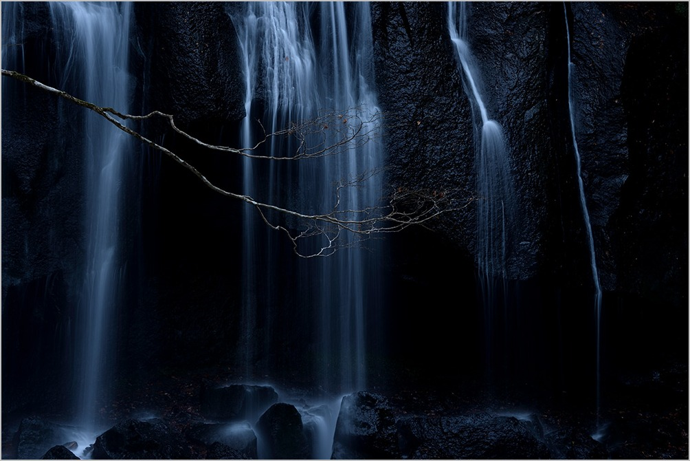 冬の五重奏 Quintet for the winter : Nikon Df_c0065410_19555729.jpg