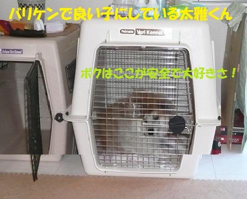 f0121712_16322896.jpg