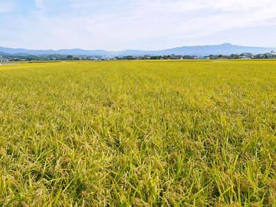 砂田米 来年も美味しいお米を育てるために!その2:れんげの種まきと転圧作業_a0254656_17235256.jpg