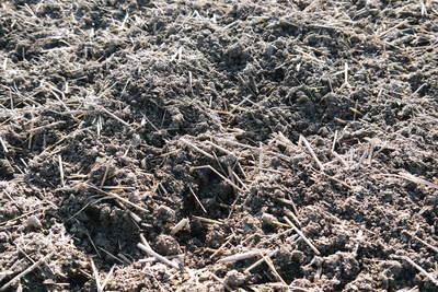 砂田米 来年も美味しいお米を育てるために!その2:れんげの種まきと転圧作業_a0254656_18135136.jpg
