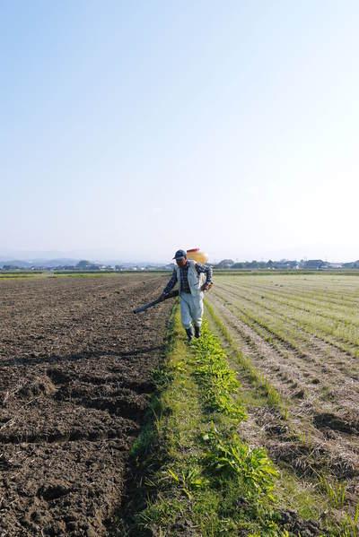 砂田米 来年も美味しいお米を育てるために!その2:れんげの種まきと転圧作業_a0254656_18514534.jpg