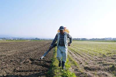 砂田米 来年も美味しいお米を育てるために!その2:れんげの種まきと転圧作業_a0254656_1944879.jpg
