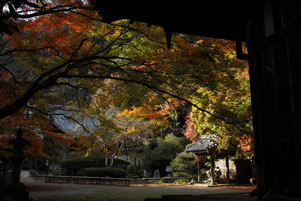 紅葉 2014  <金蔵寺>                          _f0021869_17115872.jpg