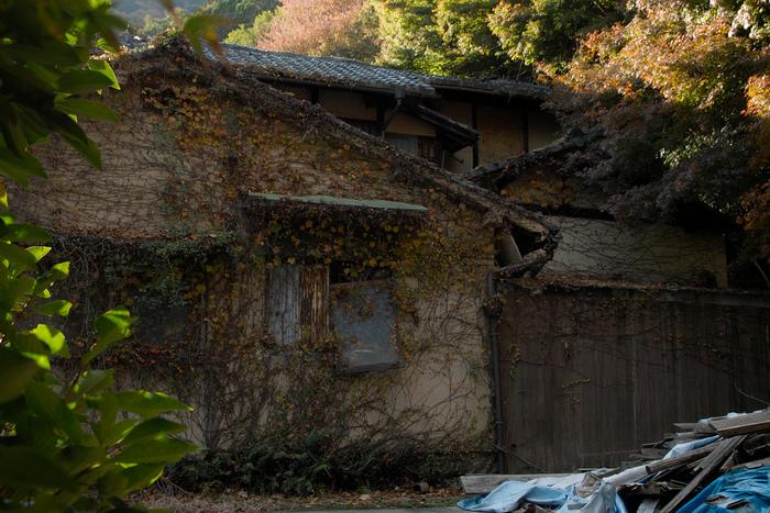 紅葉 2014  <金蔵寺>                          _f0021869_1713017.jpg