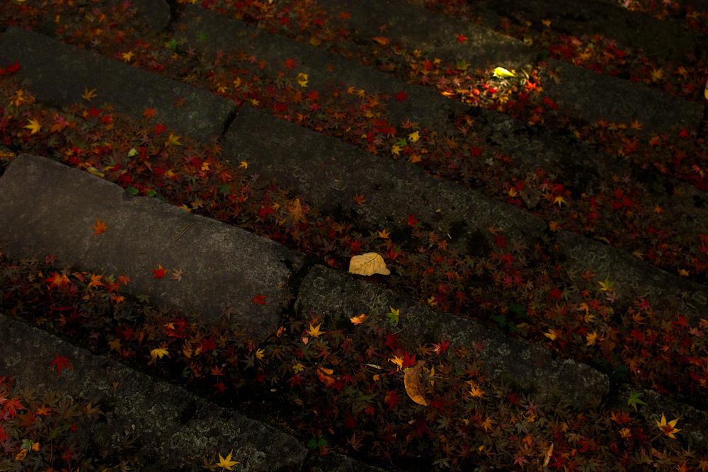 紅葉 2014  <金蔵寺>                          _f0021869_17132278.jpg