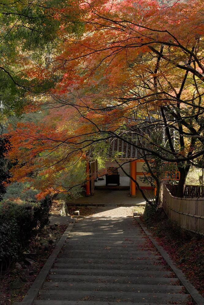 紅葉 2014  <金蔵寺>                           _f0021869_17161448.jpg