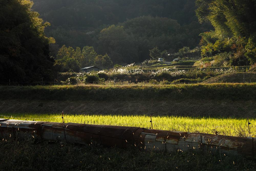 紅葉 2014  <金蔵寺>                           _f0021869_17164221.jpg
