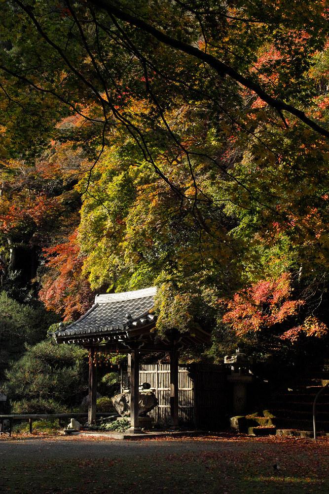 紅葉 2014  <金蔵寺>                           _f0021869_1716833.jpg