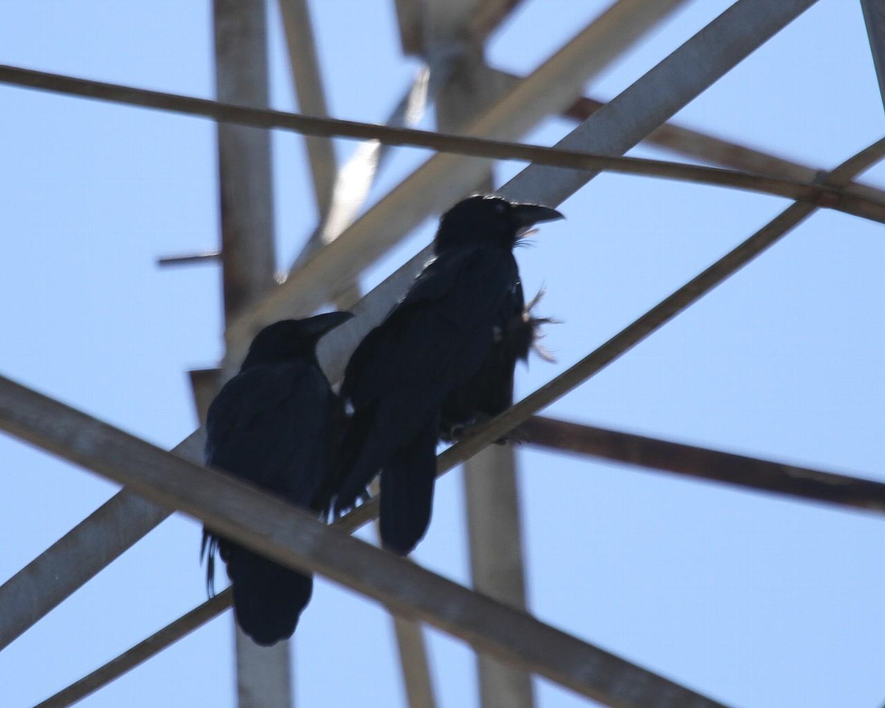 カリフォルニアの山の鳥その3_f0105570_2141298.jpg