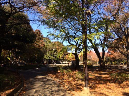 世田谷公園_d0118072_1131953.jpg