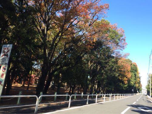 世田谷公園_d0118072_113596.jpg