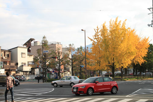 紅葉めぐり19 紫明通りも紅葉盛り_e0048413_19535051.jpg