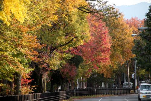 紅葉めぐり19 紫明通りも紅葉盛り_e0048413_19541652.jpg