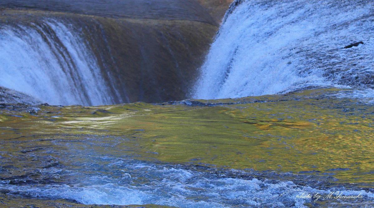 黄葉の流れとアオジ_c0217255_6592887.jpg