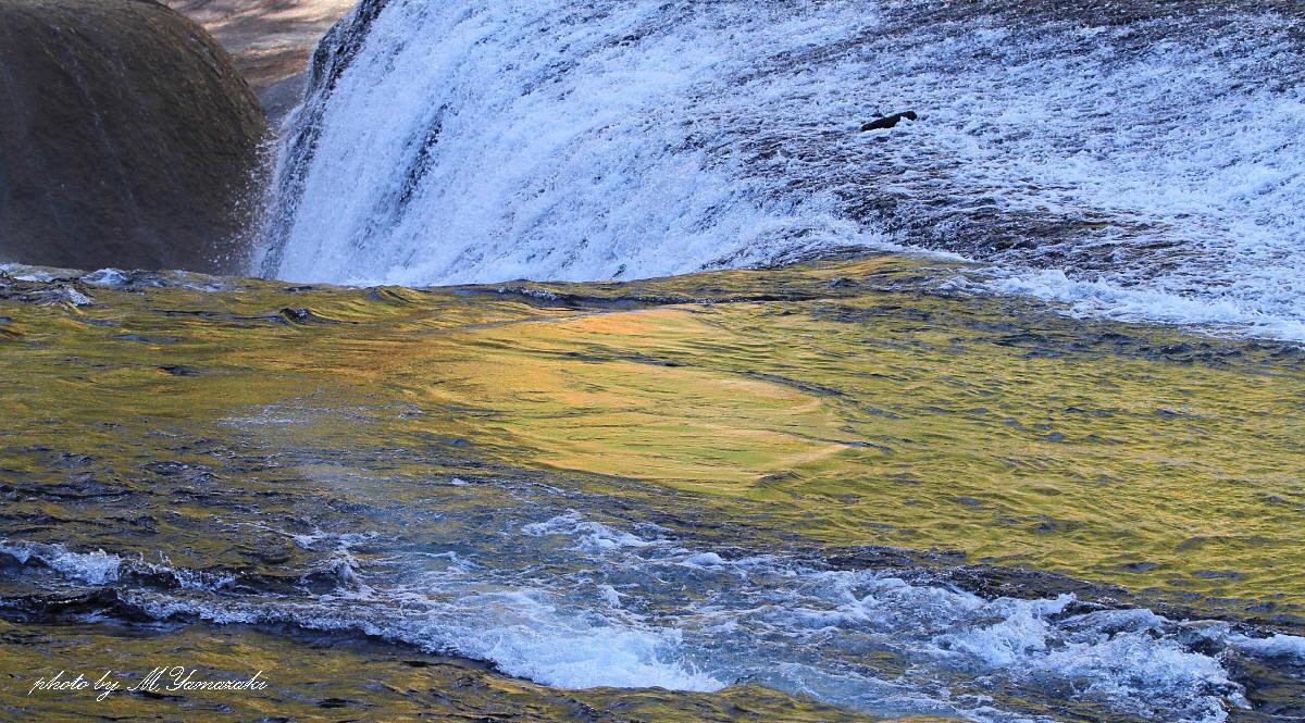黄葉の流れとアオジ_c0217255_70769.jpg