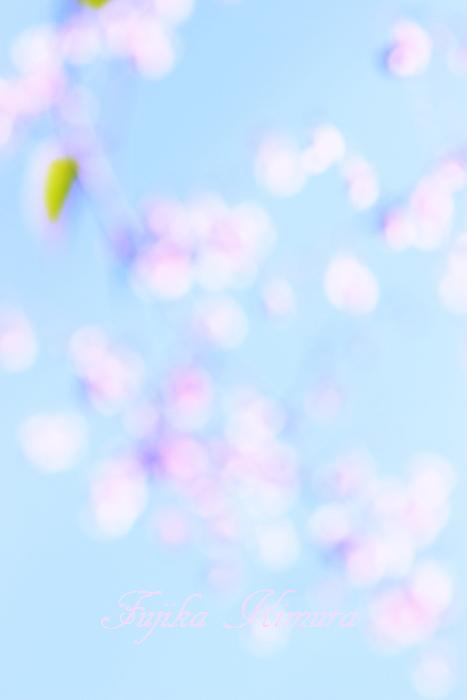 ■■ 晩秋に 梅花の夢を ■■_c0195662_2140593.jpg