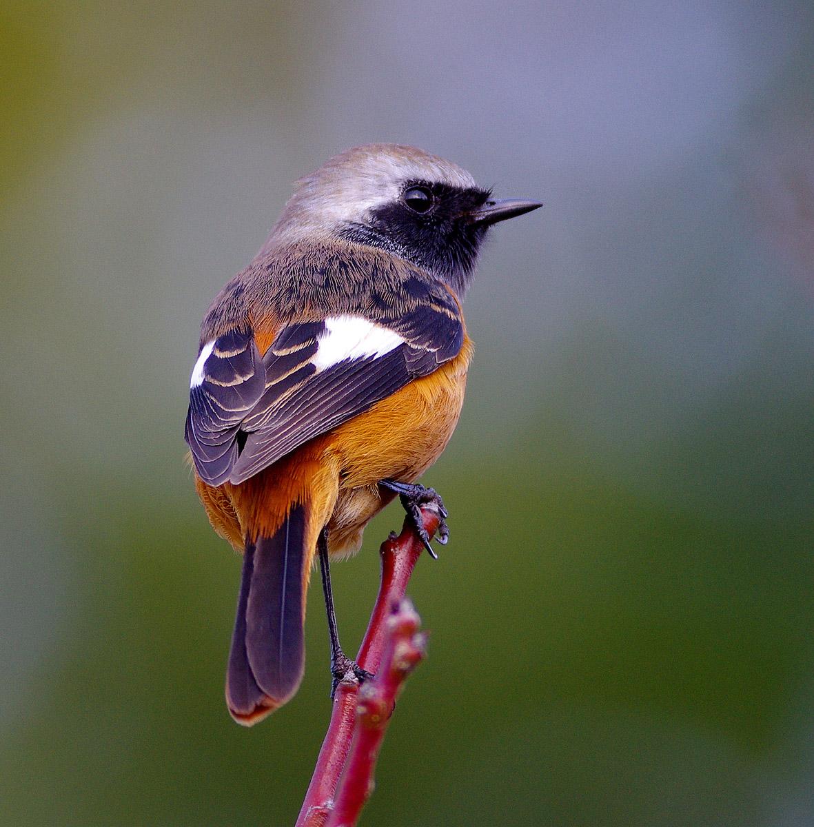 近つ飛鳥 周辺ぶらぶら_f0215767_17444836.jpg