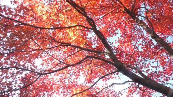 環境芸術の森(唐津市)に行ってきました_b0214473_2132596.jpg