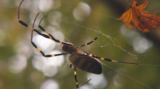 蜘蛛も迷惑たったことでしょう_b0214473_21534924.jpg