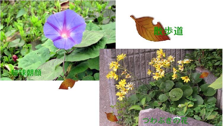 f0003174_1631717.jpg