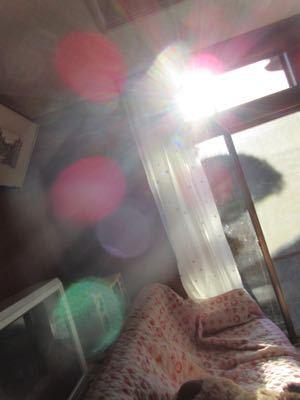 水玉太陽曼荼羅_e0059197_572162.jpg