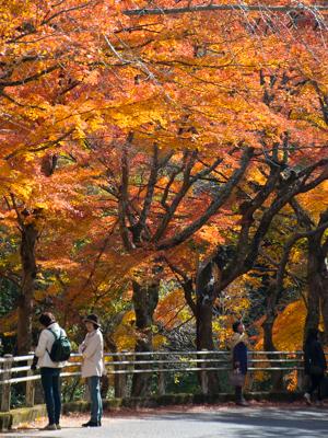 紅葉はやっぱり豪渓が一番_d0001300_2218285.jpg