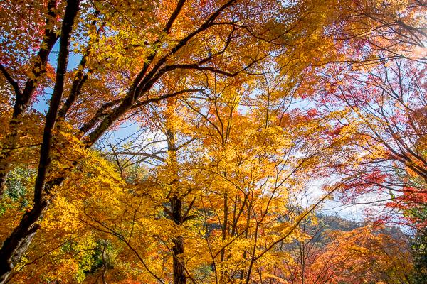 紅葉はやっぱり豪渓が一番_d0001300_22325088.jpg