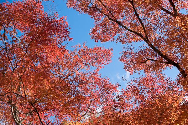 紅葉はやっぱり豪渓が一番_d0001300_2233721.jpg